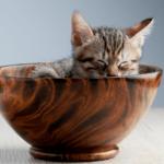 【猫の食事】生後4週過ぎ~1年までの子猫の食事!