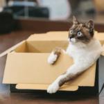 【猫の飼い方】猫を飼う心の準備とかかる費用
