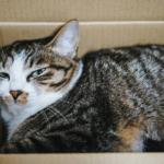 【猫の飼い方】飼う前に考慮すべき、猫が飼えなくなる4つケース。