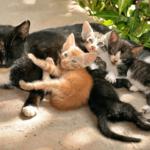 【猫の食事】生後4週間までの子猫は固形物不可!ミルクをあげよう!