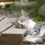 【猫の習性】うちの猫は元気がない?おもちゃで遊ぶ猫と遊ばない猫!