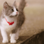 【子猫の飼い方】チビ猫のトイレのしつけ方法は超簡単!