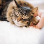 【猫の習性】猫の発するゴロゴロ音はどこから?ならす理由は?