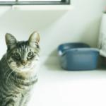 【猫の習性】トイレの後の砂かけには意外な真実が!?