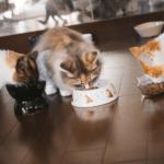 【猫の習性】エサに砂かけ!?理由は2つで全く逆の意味だった!