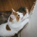 【猫の習性】猫の爪とぎはイタズラではない!叱っても無意味です