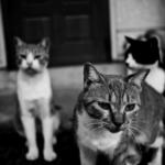 【猫の習性】猫が夜になると元気に・・・歳をとると徐々になくなる猫の本能