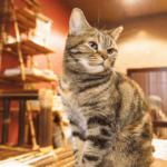 【猫の習性】猫は大好きな飼い主とは、とりあえず目を合わせない!