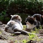【猫の性格診断】体格や毛色によって異なる猫の性格