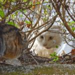 【猫の生態】猫のガチ喧嘩は稀!ほとんどは、ハッタリだった!