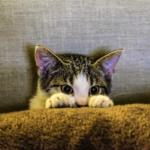 【猫の生態】気を付けて!大抵の猫は引越しや旅行が大嫌い!
