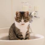 【猫の生態】猫が水を嫌がる理由は、毛の質にあった!