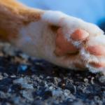 【猫のことわざ】「猫の手も借りたい」からわかる猫の生態。
