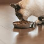 【猫の食事】生後1年からは成猫。大人用の食事を!