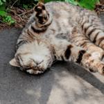 【猫の食事】太りやすい飼い猫の肥満対策