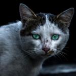 【猫のエイズ】猫がエイズに感染していないか見極めるポイント!