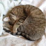 【猫の病気】猫の泌尿器症候群。エサと気温に注意が必要!