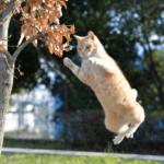 【猫の生態】猫が一番喰いつくおもちゃは!?色にも関係があった!